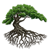 deeproot tree logo